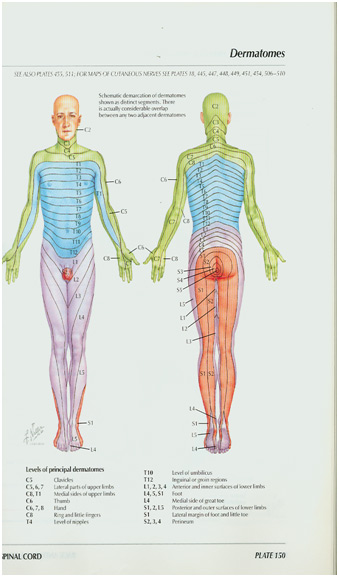 Χαρτογράφηση αισθητικών νεύρων L1 πρώτο οσφυικό, L2 δεύτερο, κλπ